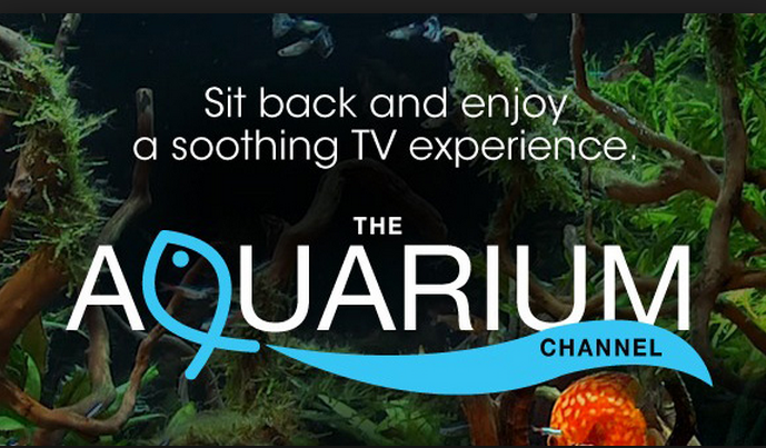 Relax and Unwind with The Aquarium Channel HD only on SKY