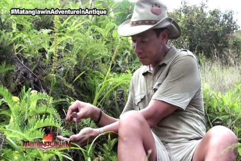 Kuya Kim inspects a local plant in his MatanglawinAdventureInAntique