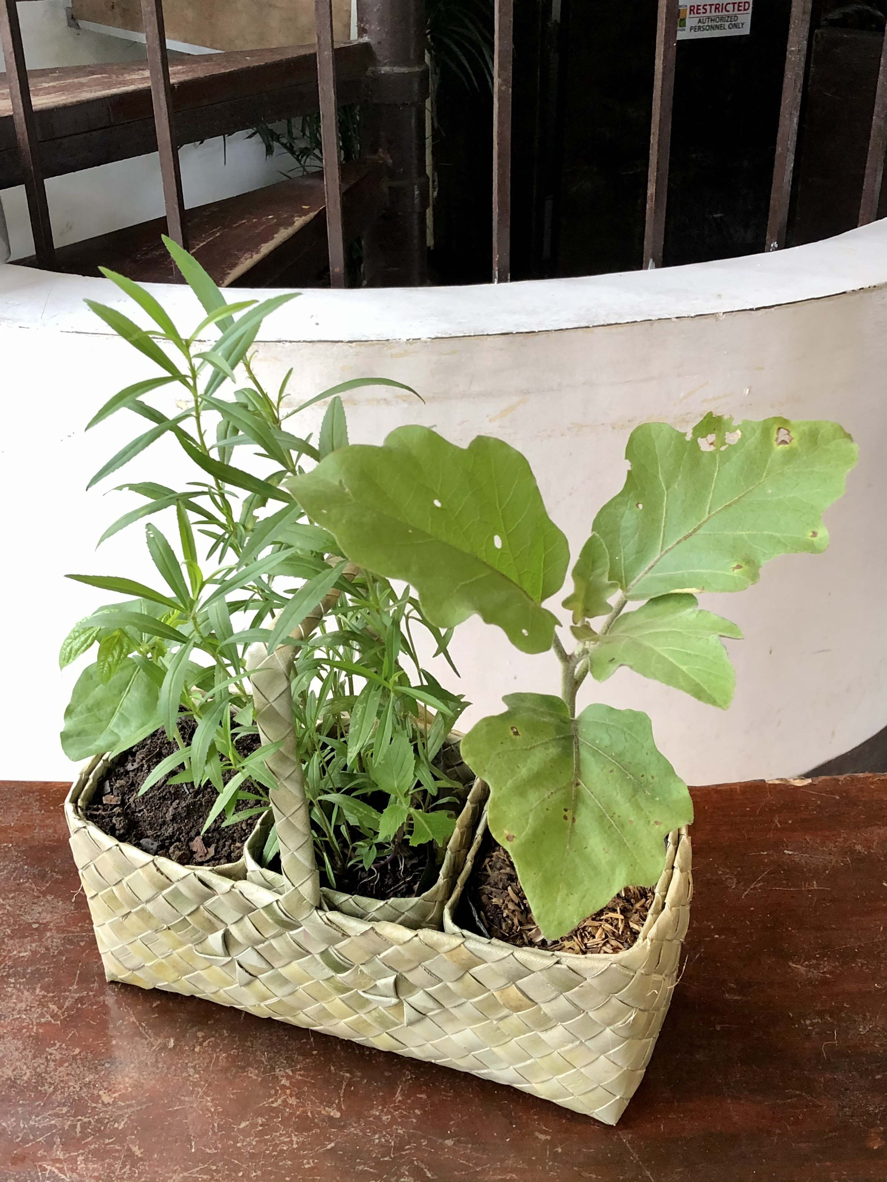 Urban farming starter kit, Quezon City